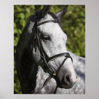 portrait of white horse 2 poster