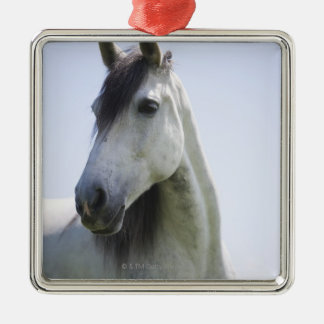 portrait of white horse christmas ornament