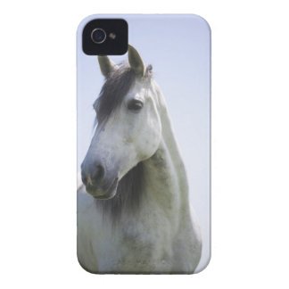 portrait of white horse iPhone 4 Case-Mate case