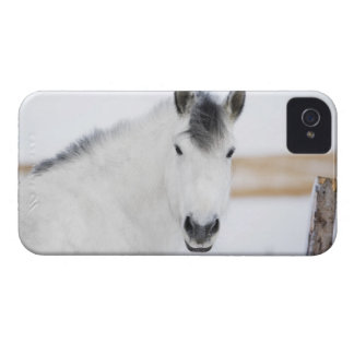 portrait of white horse iPhone 4 cover
