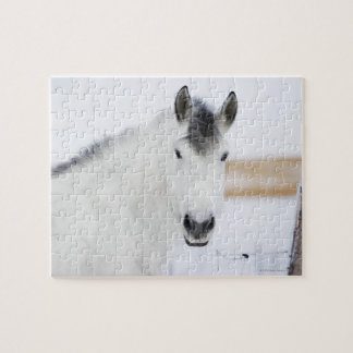 portrait of white horse jigsaw puzzle