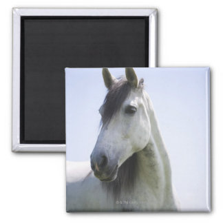 portrait of white horse square magnet