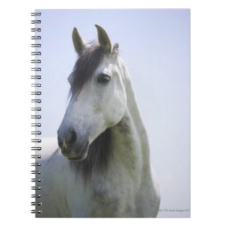portrait of white horse notebook