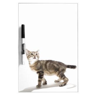 Portrait of white kitten looking up dry erase board