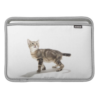 Portrait of white kitten looking up MacBook sleeve