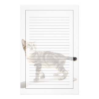 Portrait of white kitten looking up stationery
