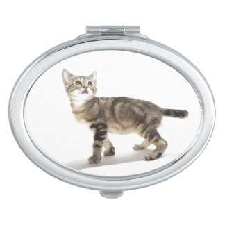 Portrait of white kitten looking up travel mirrors