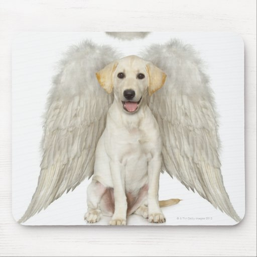 Portrait of white Labrador retriever wearing Mouse Pads
