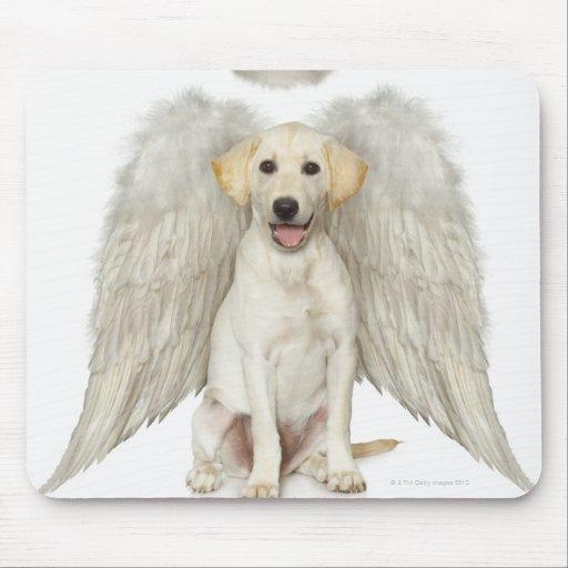 Portrait of white Labrador retriever wearing Mouse Pads