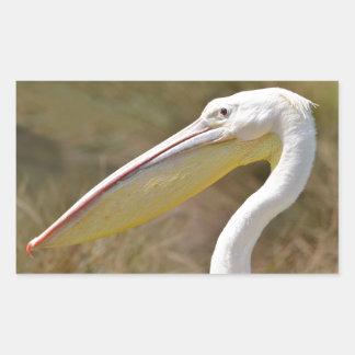 Portrait of white pelican rectangular sticker