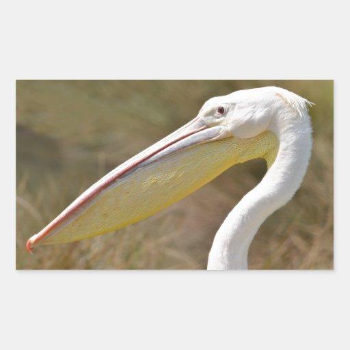 Portrait of white pelican rectangle stickers