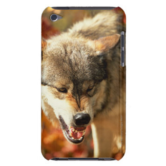 Portrait of wolf growling iPod touch case