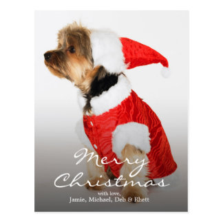 Portrait of Yorkshire Terrier Wearing Santa Hat Postcard