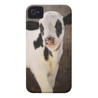 Portrait of young calf in stable iPhone 4 Case-Mate cases