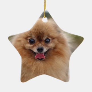 Portrait Pomeranian Dog Ceramic Star Decoration