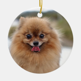 Portrait Pomeranian Dog Round Ceramic Decoration