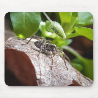 Portrait - Young Spider Mouse Pad
