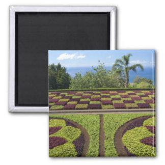 Portugal, Madeira Island, Funchal. Botanical Magnet