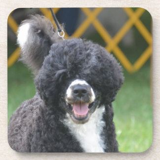 Portuguese Water Dog Drink Coasters