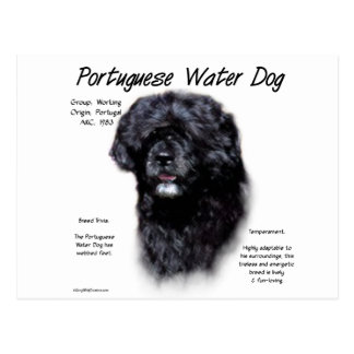 Portuguese Water Dog History Design Postcard
