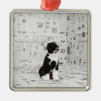 Portuguese Water Dog in room covered in Christmas Ornament