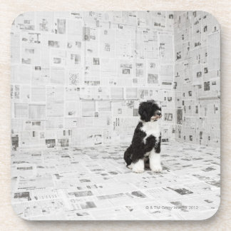 Portuguese Water Dog in room covered in Coaster