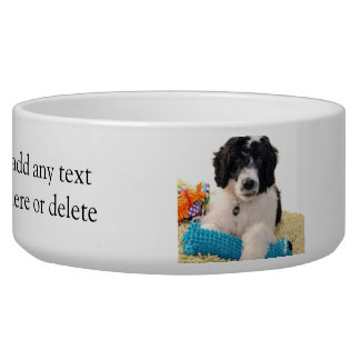 Portuguese Water Dog Puppy With Toys Pet Bowls