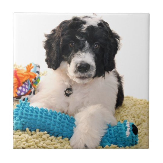 Portuguese Water Dog Puppy With Toys Small Square Tile