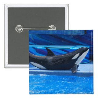 Posing Orca Button