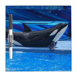 Posing Orca Dry Erase Board