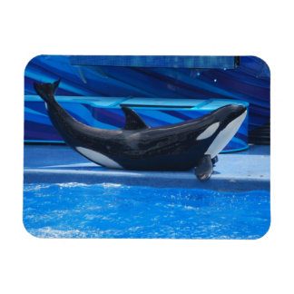 Posing Orca Flexible Magnet
