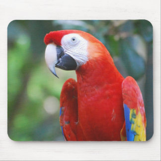 Posing Parrot Mouse Pad