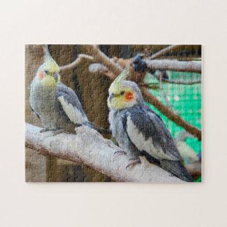 Posing Parrots Jigsaw Puzzle