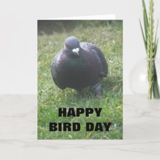 Posing Pigeon Custom Birthday Card