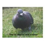 Posing Pigeon Custom Postcard