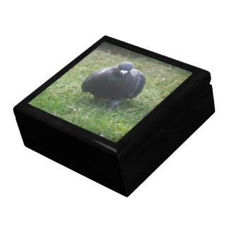 Posing Pigeon Gift Box