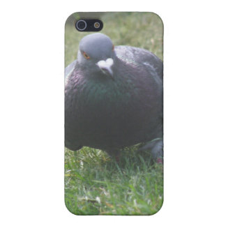 Posing Pigeon  iPhone 5/5S Covers