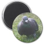 Posing Pigeon Magnet