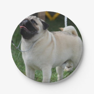 Posing Pug 7 Inch Paper Plate