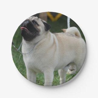 Posing Pug Paper Plate