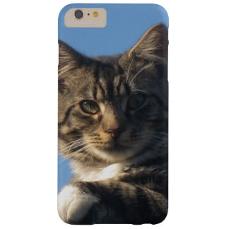 Posing Tabby Kitten Barely There iPhone 6 Plus Case