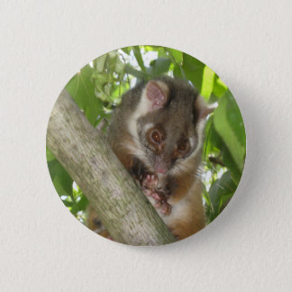 Possum In A Tree 6 Cm Round Badge