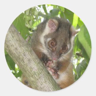 Possum In A Tree Classic Round Sticker