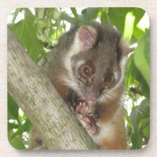 Possum In A Tree Coaster