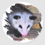 Possum Opossum Stickers
