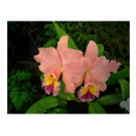Post Card: Pink Orchids Postcard