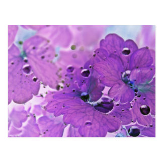 Post card, Rain drops