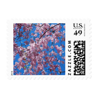 Postage Stamp - Beautiful Cherry Blossom Trees