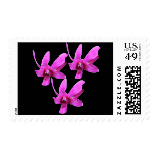 Postage Stamps - Cooktown Orchid