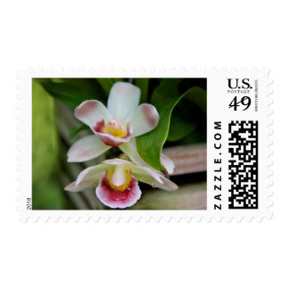Postage Stamps - Fan Shaped Orchid